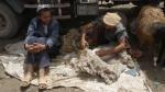 Esquilador en el mercado del ganado de Kashgar