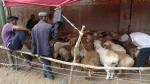 Kashgar. El mercado del ganado
