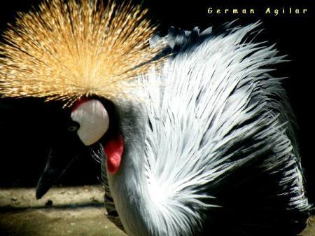 Grulla exotica en el zoo de Surabaya