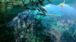 Texturas bajo el agua
