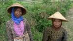Mujeres campesinas en Prambanam