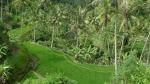 Arrozales en Tampasarik, cerca de Ubud