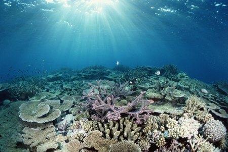 bajo el agua paradise reef
