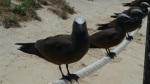Colonia de aves en Michaelmas cay