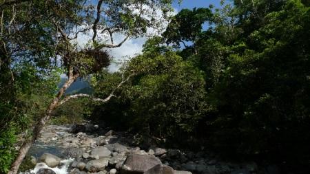 Daintree forest Wet tropics Queensland