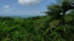 Deintree forest