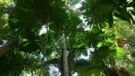 Selva pura