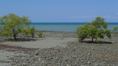 Manglar en cape tribulation